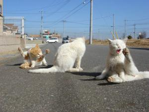 Ospalé kočky na silnici