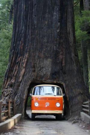 Tunel z kmenu stromu