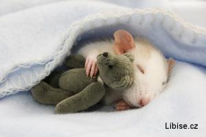 Roztomilá myška