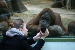 Opičák si čte v mobilu