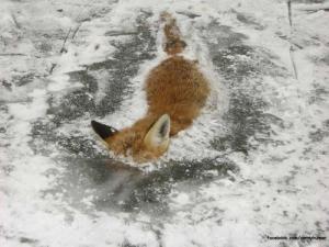 Zamrznutý Firefox :D