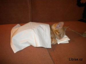 Když kočička spinká