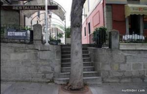 Dobře umístěný strom