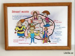 Ženský mozek