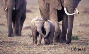 Sloní láska :)