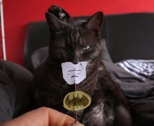 Kočka batman