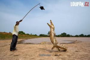 Cvičení krokodýla