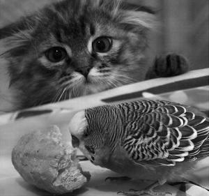 Kočka a papoušek