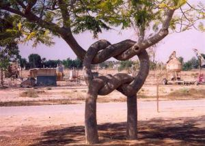 Preclíkové stromy