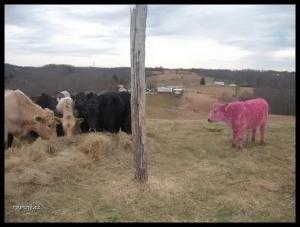 Trochu jiná kráva