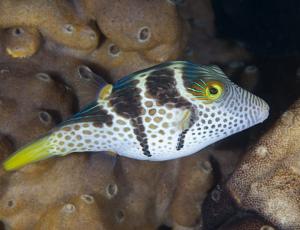 Ryba - Hranobřich