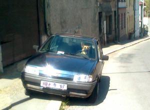Řidič Rex