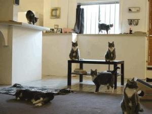 Kočky v domácnosti
