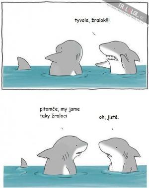 Žralok!!!