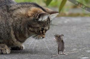Kocour vs. myš