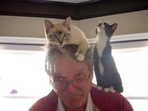 Zvědavé kočky