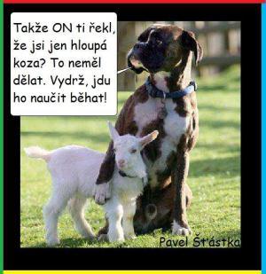 Hloupa koza