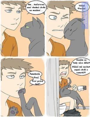 Kočičí logika