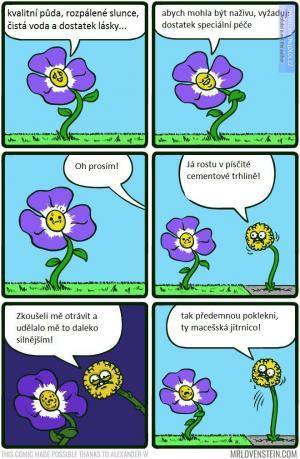 Život květin