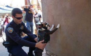 Nebezpečný pes