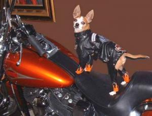 Pes motorkář
