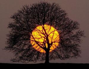 Západ slunce vs. strom