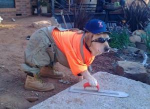 Pracující pes