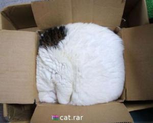 Kočka.rar