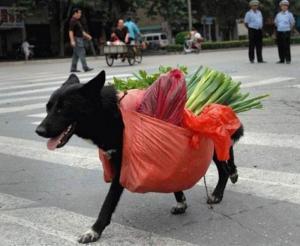 Nakupující pes