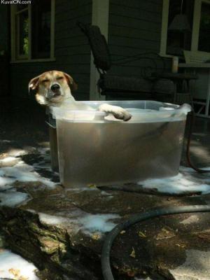 Pejsek se koupe