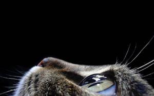 Kočičí detail