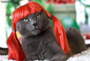Módní kočka