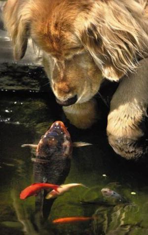 Pes vs. ryba