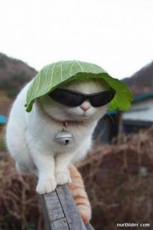 Kočičí elegán
