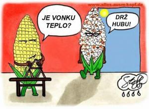 Kukuřice a teplo