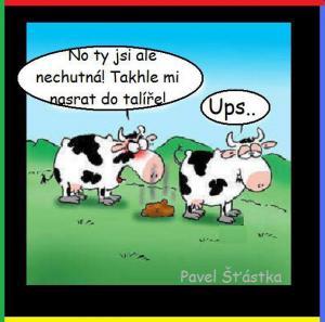 Krávo
