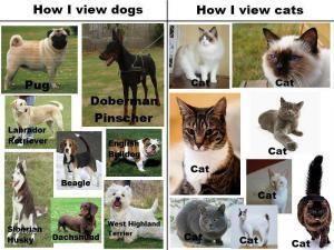 Psi vs kočky