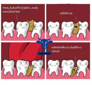 Kukuřice mezi zuby