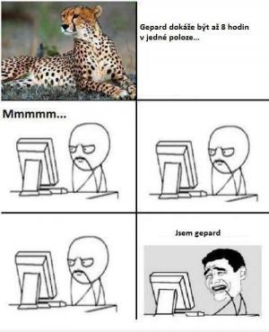 Geopard