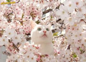 Tahle kočka ví, jak se fotit.