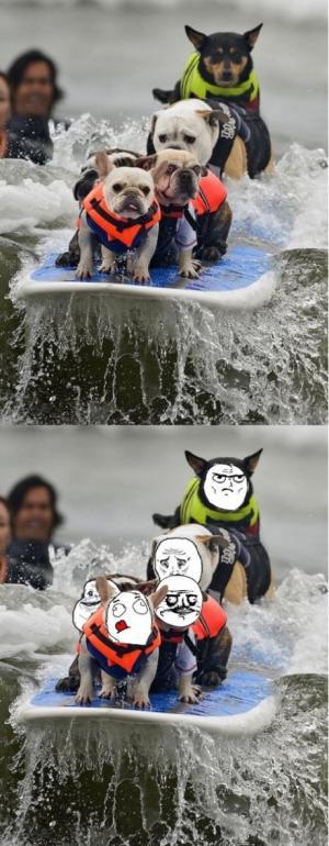 Psi na vodě