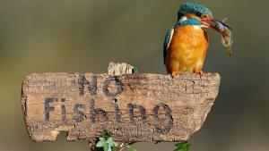 Zákaz rybaření