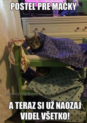 Postel pro kočky