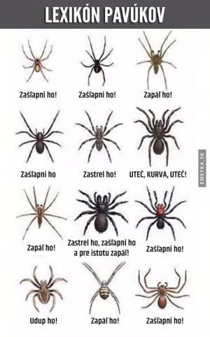 Lexikon pavouků