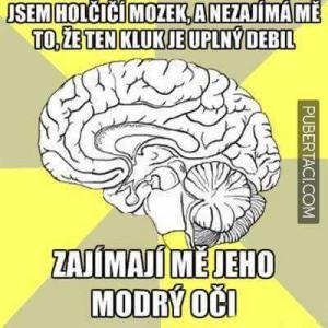 Holčičí mozek