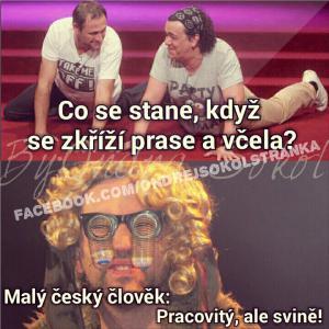 Malý český člověk