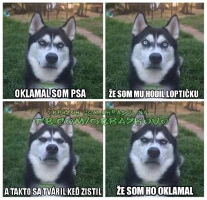 Můj pes :D