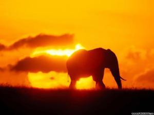 slon při západu slunce