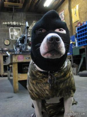 Pes lupič