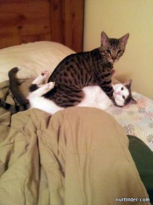 Kočičí neřesti